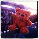 fat-teddy-15463246
