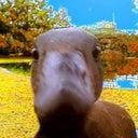 jan-oschii-52202116