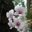 guntur-dharma-putra-57470455