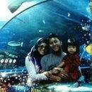 Syeera Aminuddin