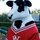 Orange Avenue Cow