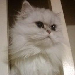 Miss Kitty Purr 💜💛💙