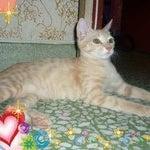 Gurlz Cat