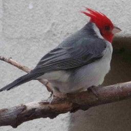 Littlebird93