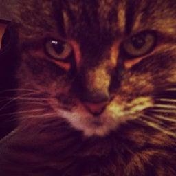 Meredith T