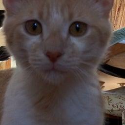 Gaddafi The Cat