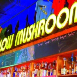 MellowMushroomTuscaloosa
